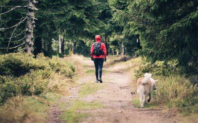 Zakopane – gdzie z psem? Zaplanuj wyjazd w góry z czworonogiem!